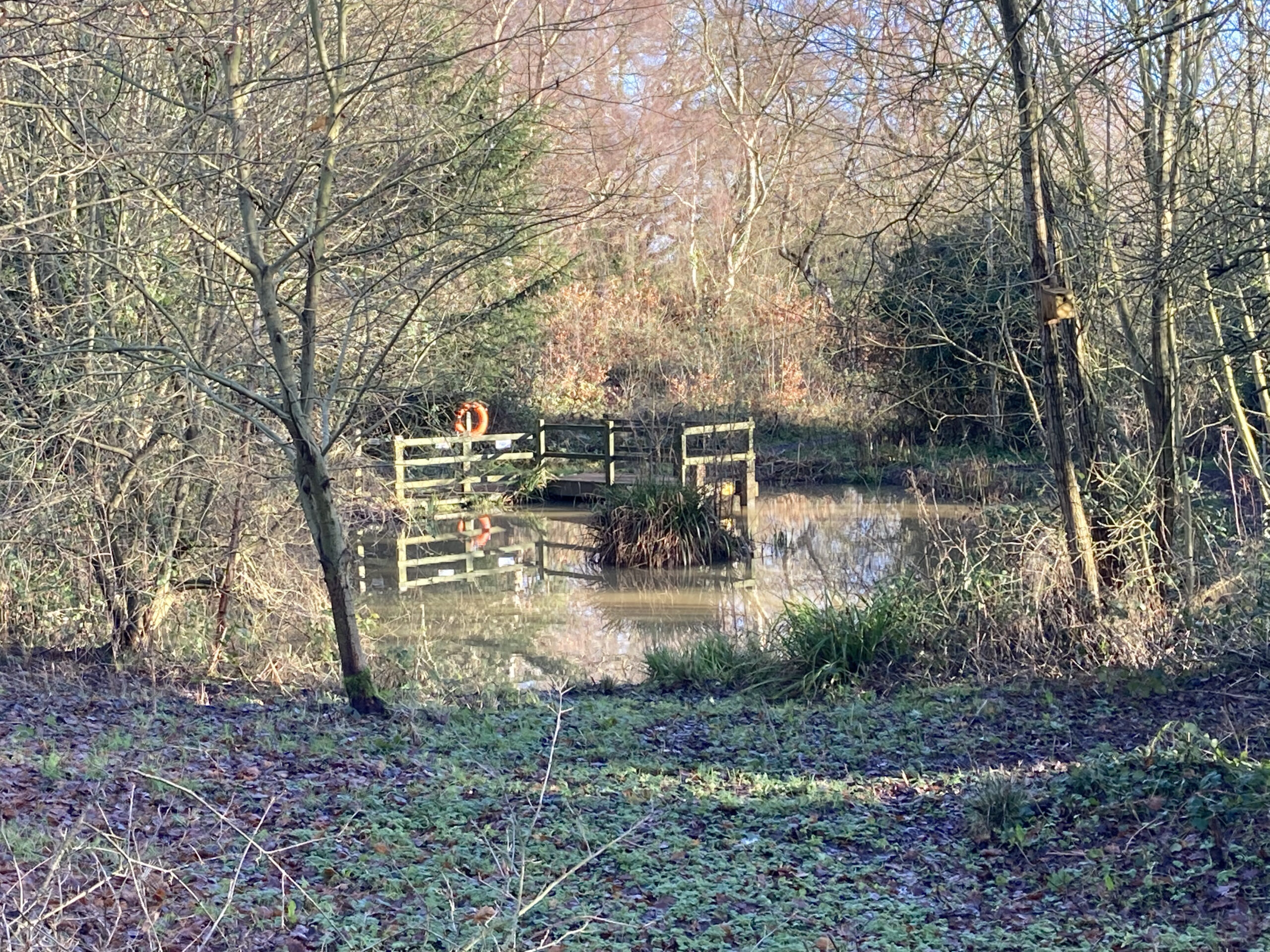 The Pond from the Bird Hide