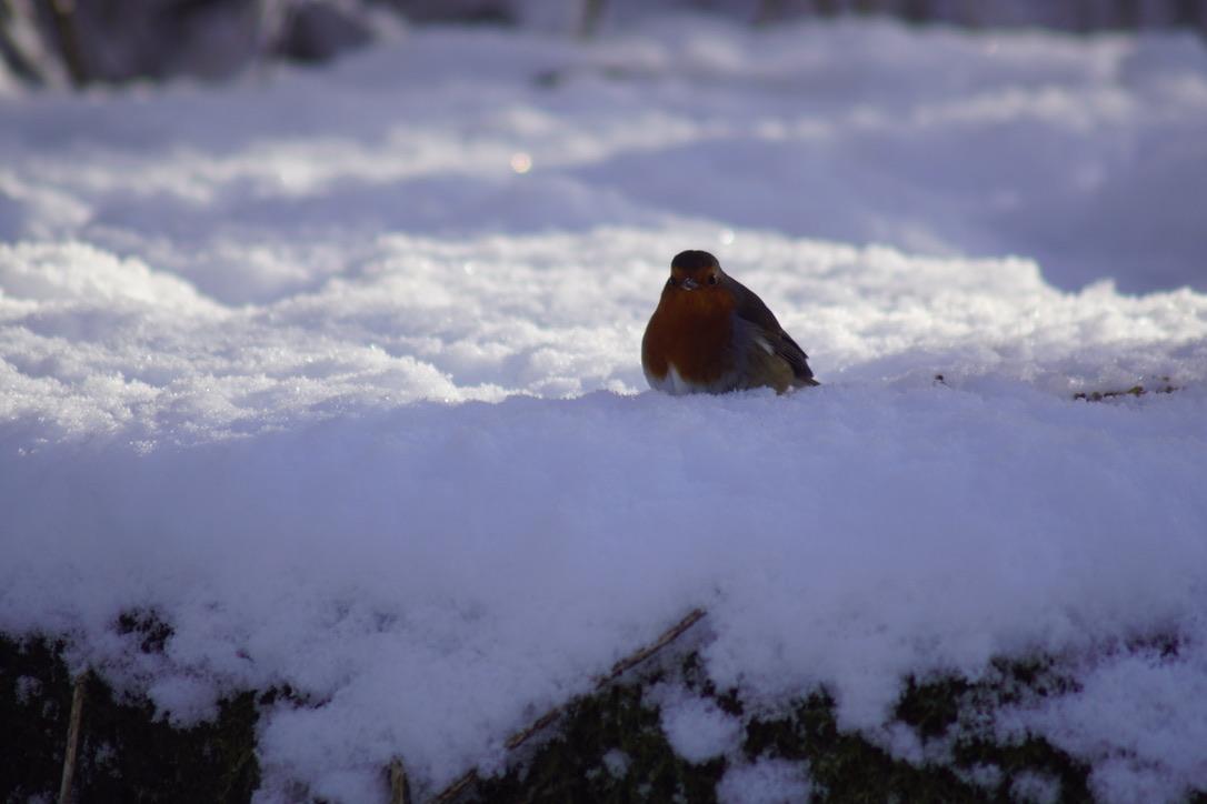 Robin on the Millstone
