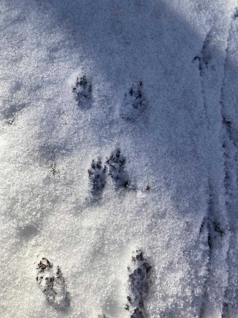 Squirrel prints