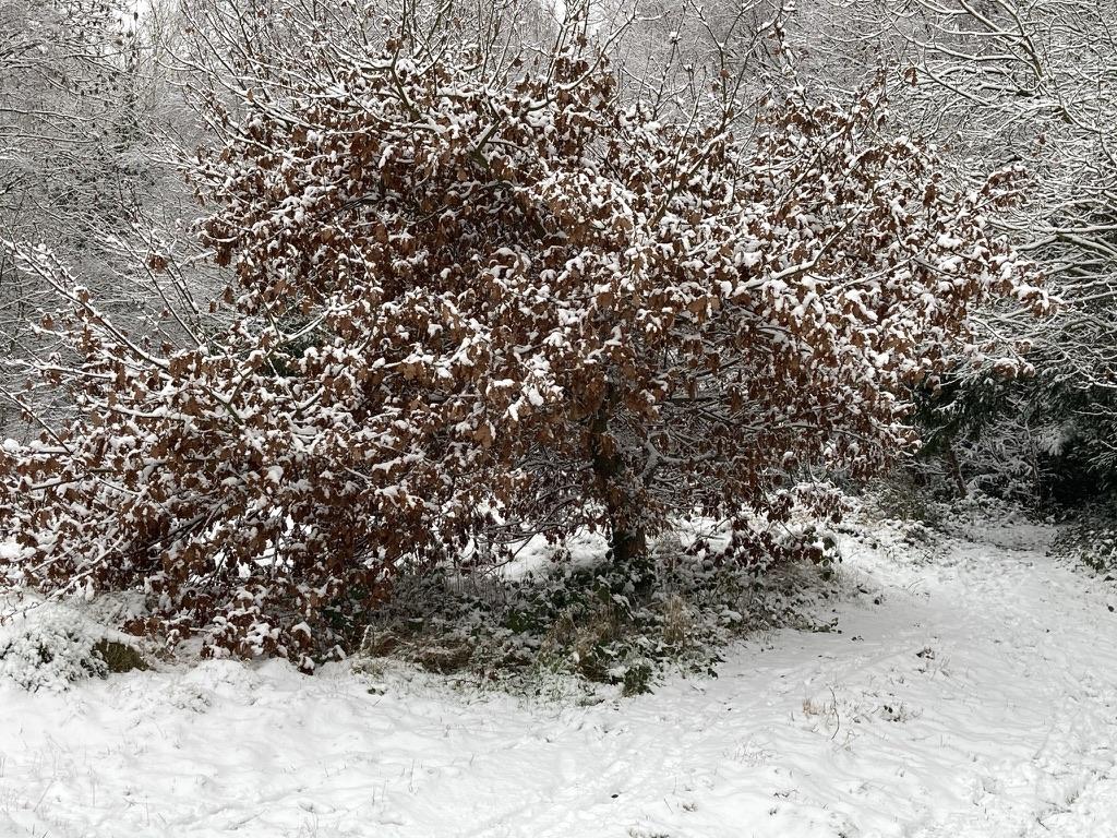 Oak Tree on the Heath