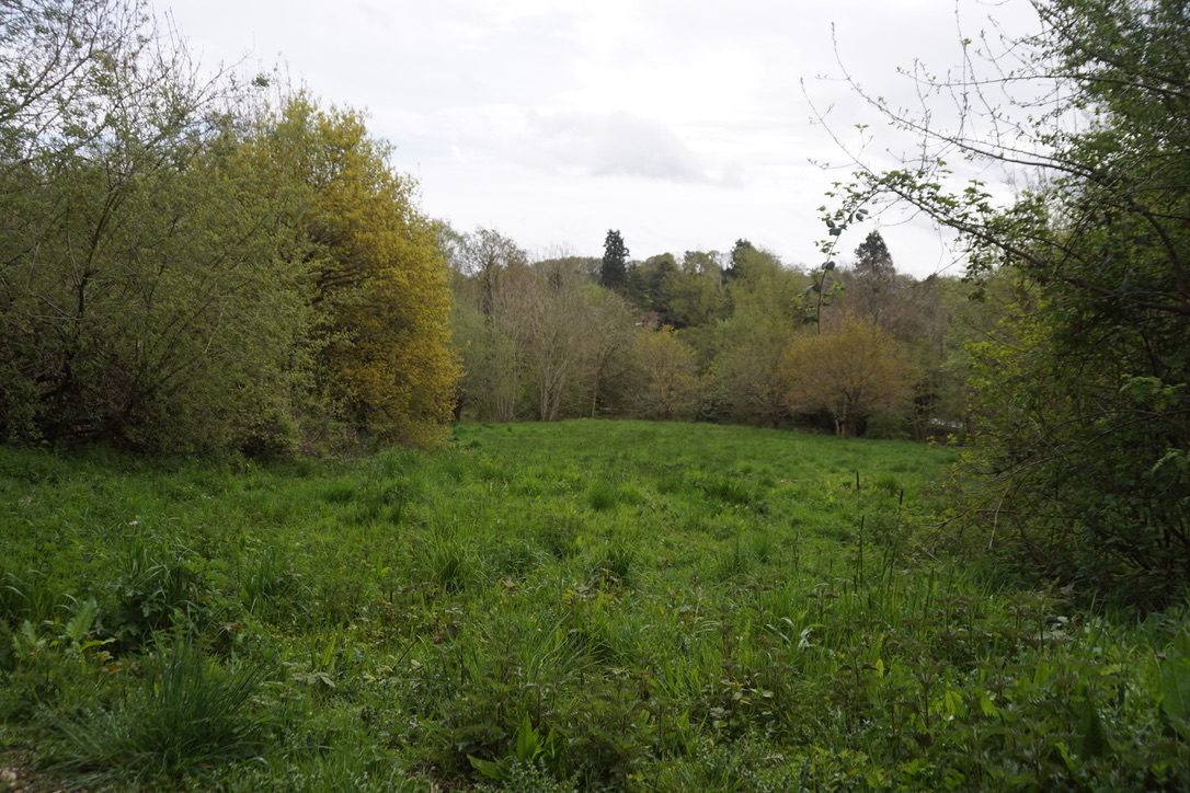The Meadow - early May