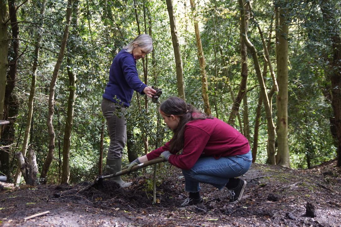 Volunteers planting holly trees