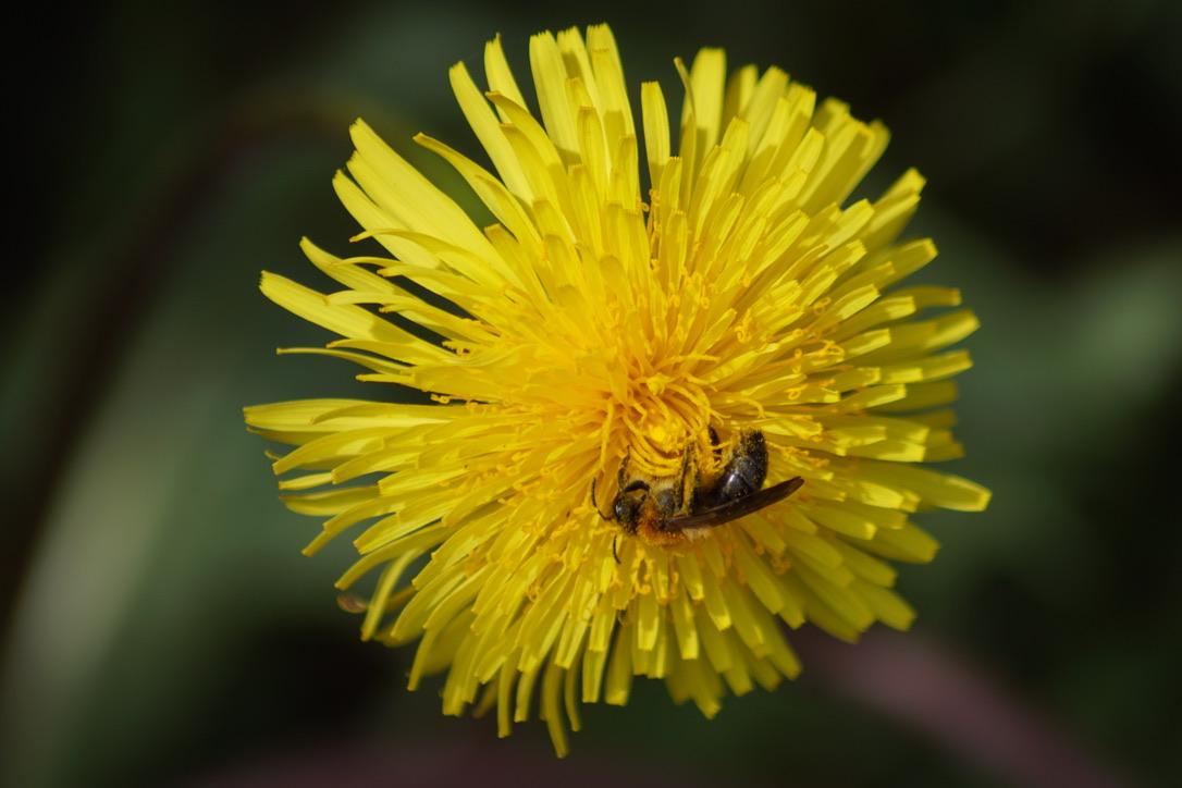 Communal Mining Bee