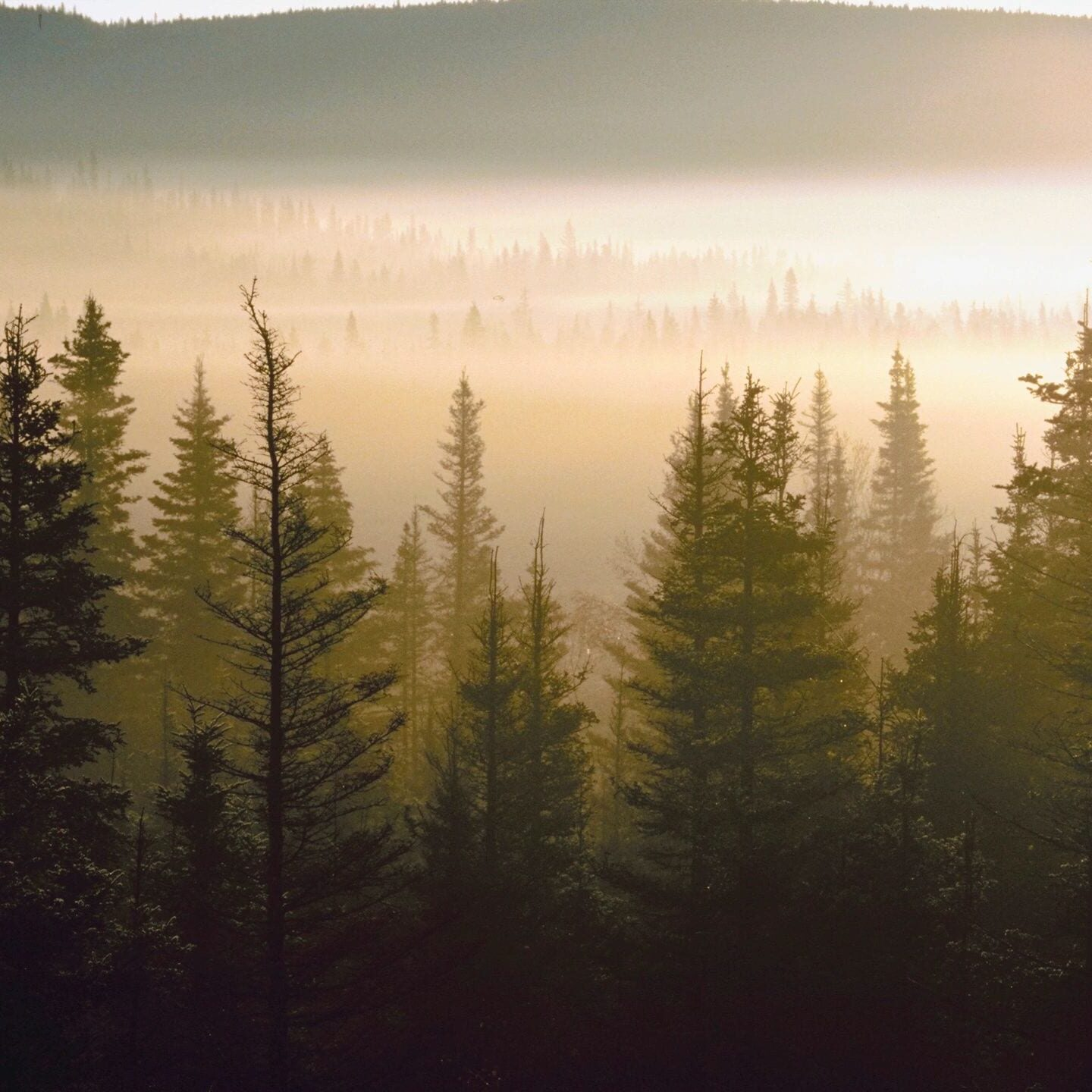 banner image of forest of trees
