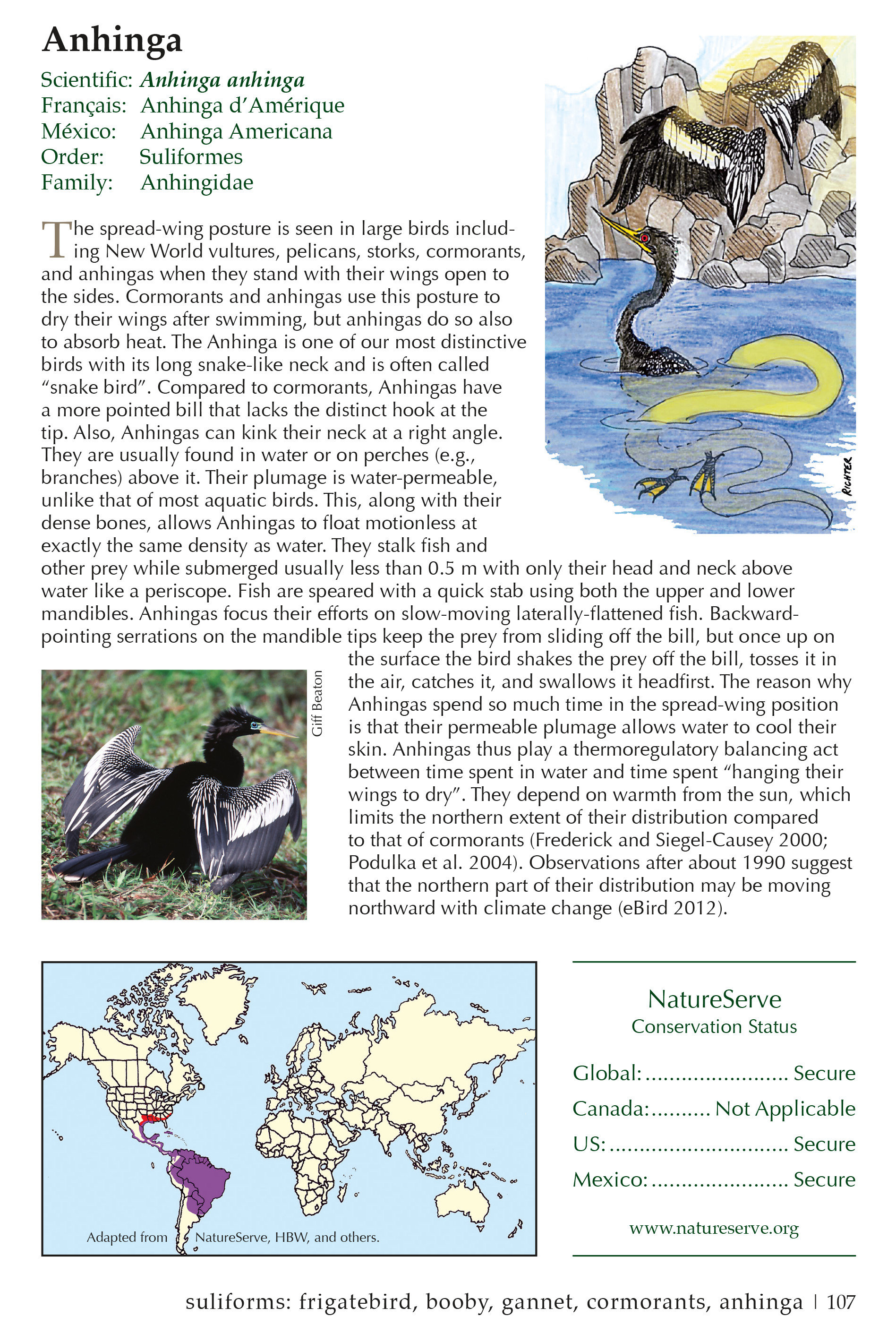 Sample page for the Anhinga