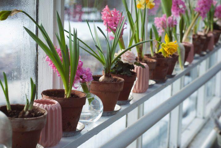 Winter Garden Tips from Roxanne DePalma