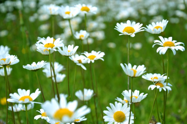 Here are some great spring tips for your garden from Roxanne!