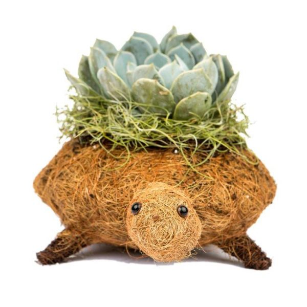 Turtle Coco Planter by ShopDePalma