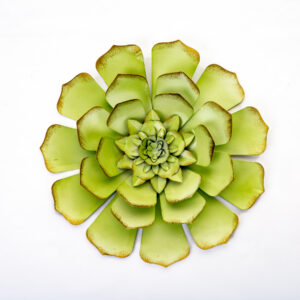 Ultimate Innovations Wall Succulent
