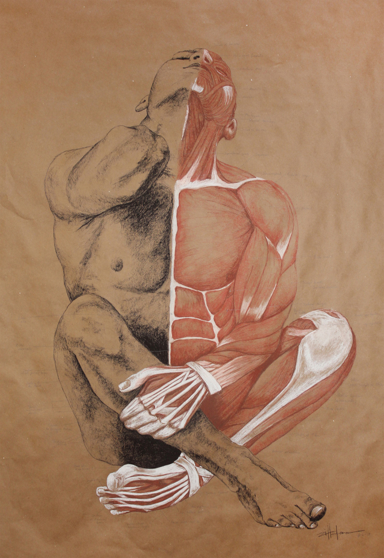 "Original Art , Male Figure - Muscle Study - Labeling in Charcoal & Conte ""MUSCLE MAN"" by Marcy Ann Villafaña"