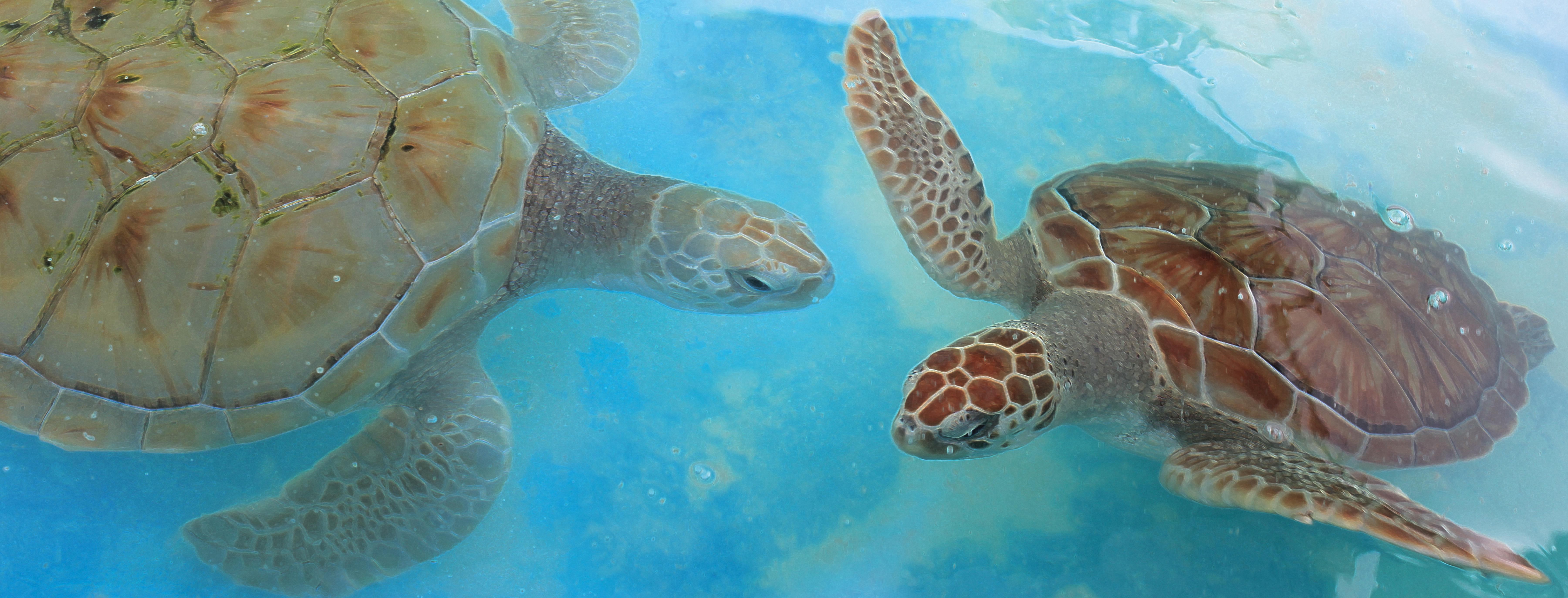 Danza de las Tortugas - Dancing Turtles of the Caribbean Oceans - Original underwater photos by Marcy Ann VIllafana