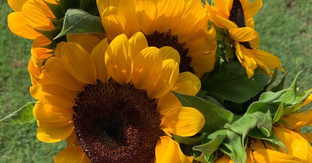 sunflowers not all stress is bad, Jamie Falcon Wellness