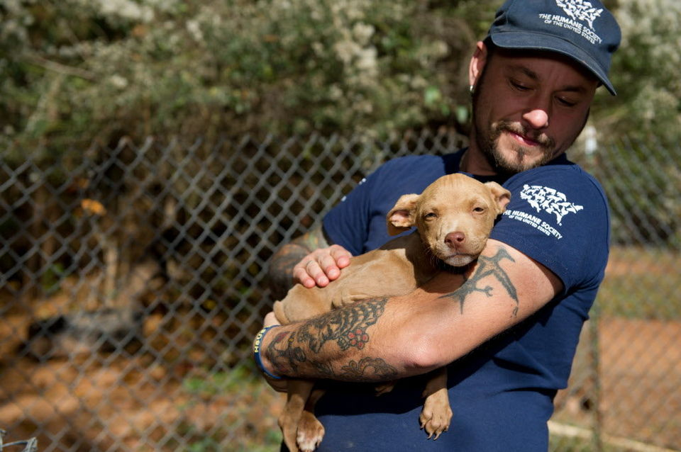 More than 30 dogs were rescued Tuesday, Nov. 19, 2013, at three sites in Tallapoosa County, Ala., after authorities served search warrants in connection with suspected dogfighting operations. (Photo courtesy of Meredith Lee/For the Humane Society of the United States)