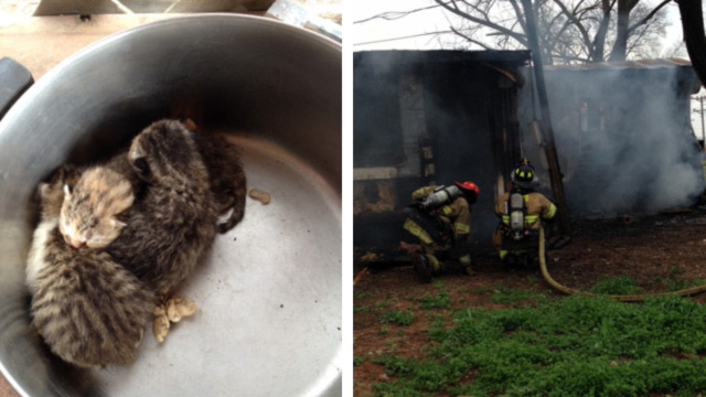Photo of 3 kittens rescued from Murfreesboro fire
