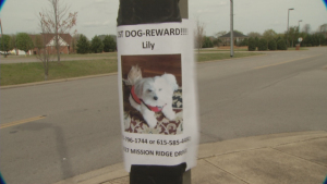 Photo of Murfreesboro family searching for dog lost during storm