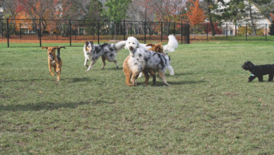 Photo of La Vergne received $25,000 grant to build a dog park