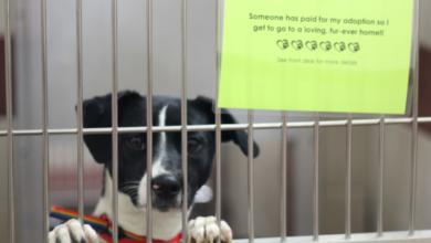 Photo of Good Samaritan Pays For Adoption Fees at PAWS