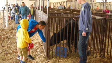 Photo of Adventures in Agriculture, Free Family Event, to Be Held April 4th at Lane Agri-Park