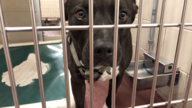 Photo of PAWS of Rutherford County Pets for Adoption June 29, 2020