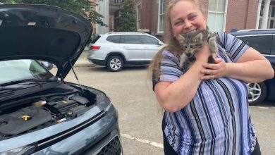 Photo of Rutherford County Employees Rescue Kitten from Employee's Vehicle Parked Near Courthouse