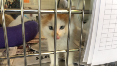 PAWS of Rutherford County Pets for Adoption August 3, 2020