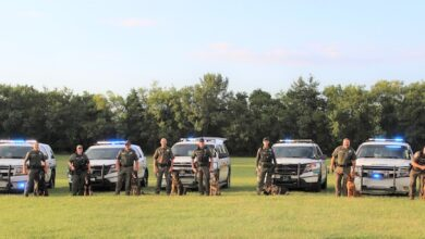 Photo of Sheriff's K9s celebrate National Dog Day