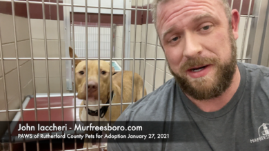 PAWS of Rutherford County Pets for Adoption January 27, 2021