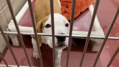 PAWS of Rutherford County Pets for Adoption February 4, 2021