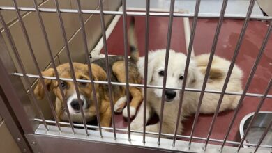 PAWS of Rutherford County Pets for Adoption April 15, 2021