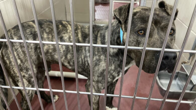 PAWS of Rutherford County Pets for Adoption March 31, 2021