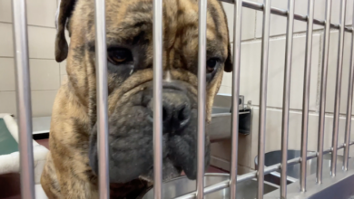 PAWS of Rutherford County Pets for Adoption May 13, 2021