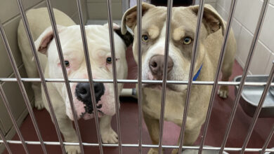 PAWS of Rutherford County Pets for Adoption May 19, 2021