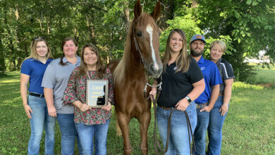 MTSU Horse Science recognition