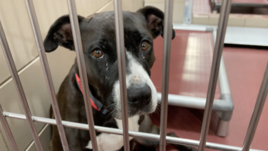 PAWS of Rutherford County Pets for Adoption June 17, 2021