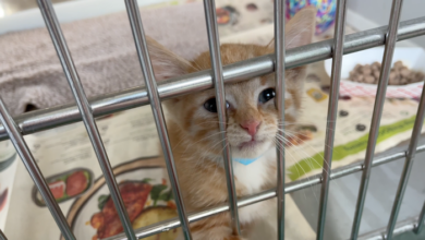 PAWS of Rutherford County Pets for Adoption June 24, 2021
