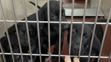 PAWS of Rutherford County Pets for Adoption July 14, 2021