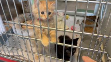 PAWS of Rutherford County Pets for Adoption July 28, 2021