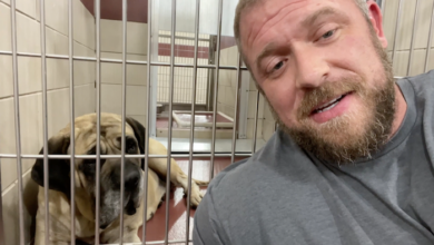 PAWS of Rutherford County Pets for Adoption August 12, 2021