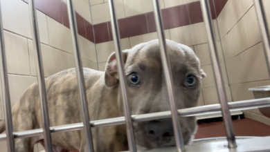 PAWS of Rutherford County Pets for Adoption August 19, 2021