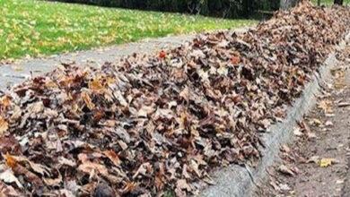 Leaf Litter Collection