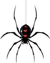 Spider Control   Spider Treatment