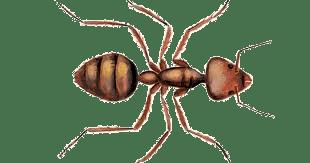 Ant Control Treatment