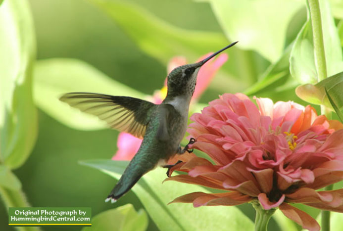 Hummer's Galore