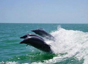 key west dolphin boat