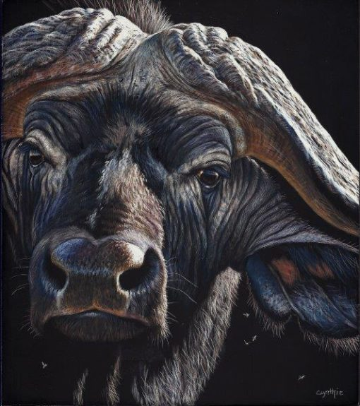 8x9 giclee prints, Buffalo Gaze by artist Cynthie Fisher, Fine Art Prints