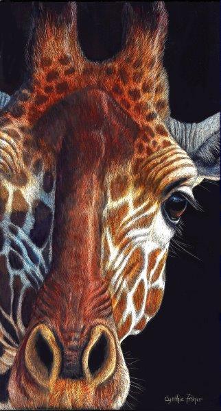 12x6 giclee print, Giraffe Gaze by artist Cynthie Fisher