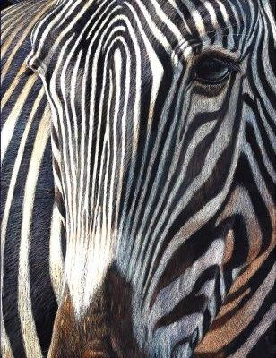 12x6 giclee print, Grevy Gaze by artist Cynthie Fisher