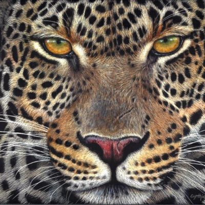 8x10 giclee print, Leopard Gaze by the artist Cynthie Fisher