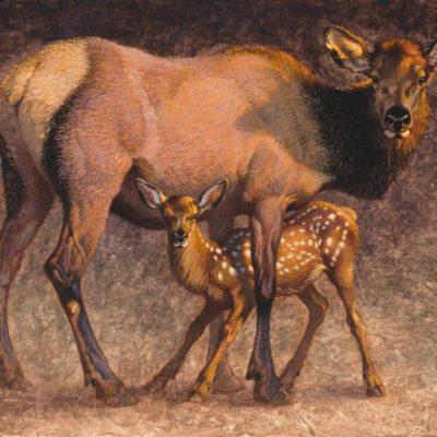 Ezra Tucker Big Country Cow & Calf 30x40