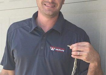 Snake Removal Montgomery, AL